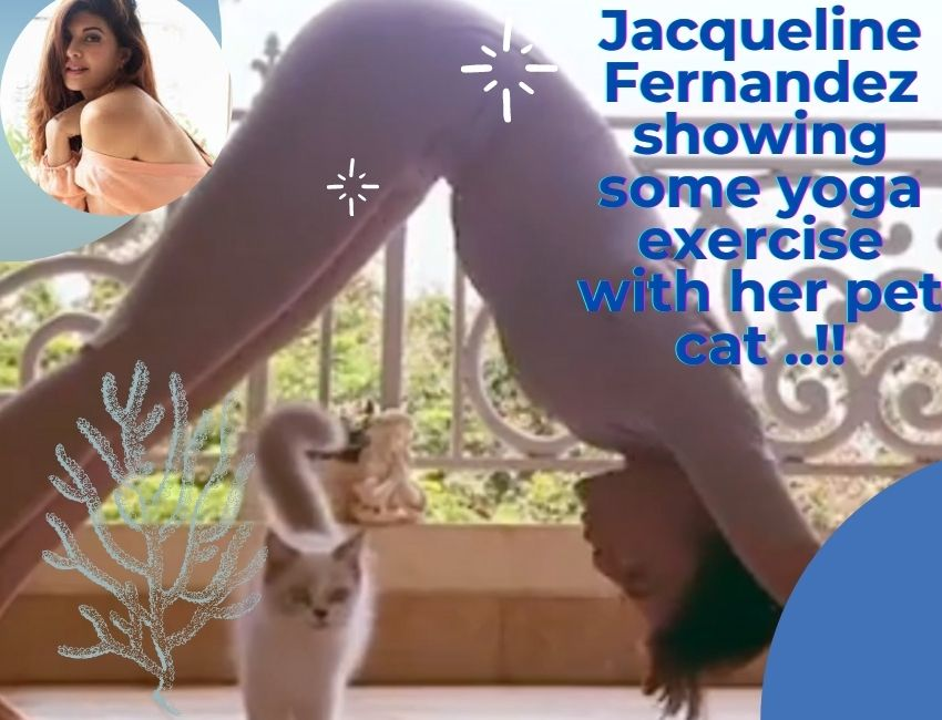 Jacqueline Fernandez showing some yoga exercise with her pet cat ..!!